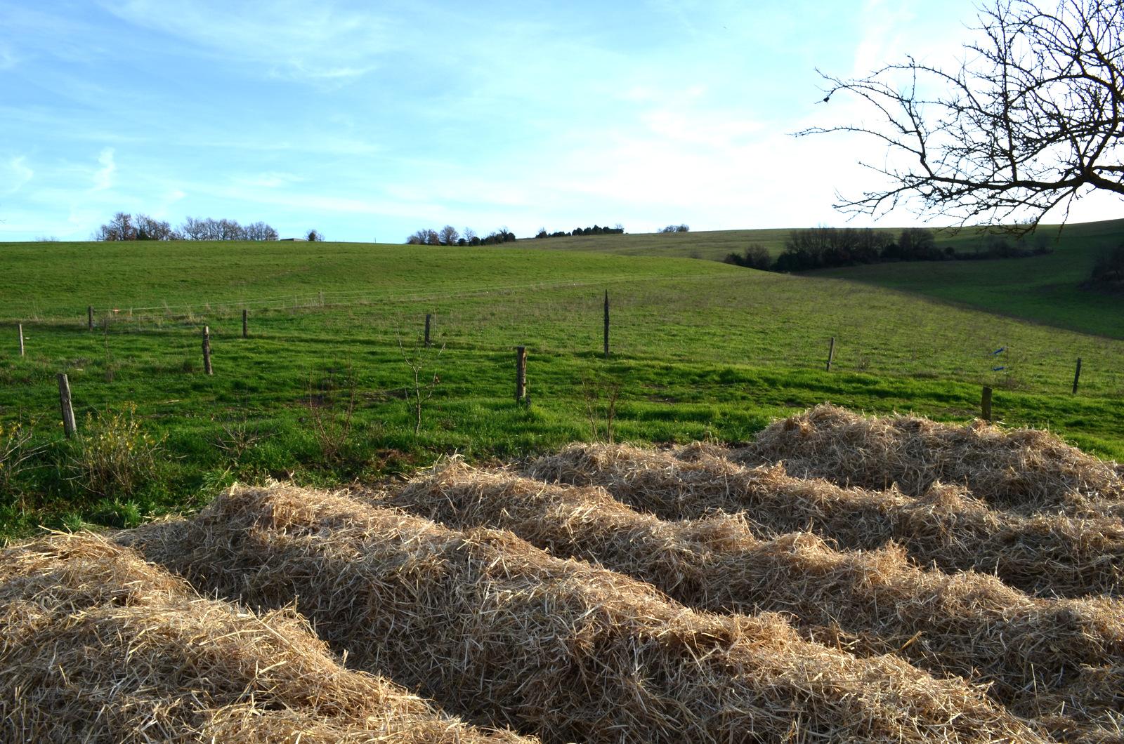 Future veggie field