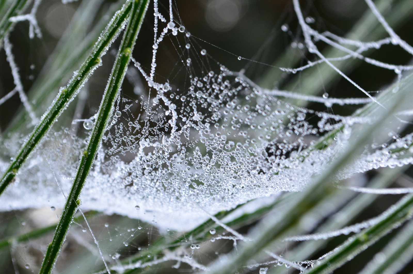 Frozen morning dew