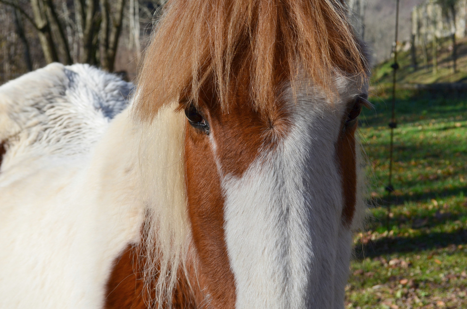 The beautiful Pequita, one of two rescued horses now living in peace here