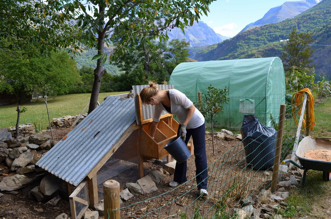 The vegan cleaning the chicken coops