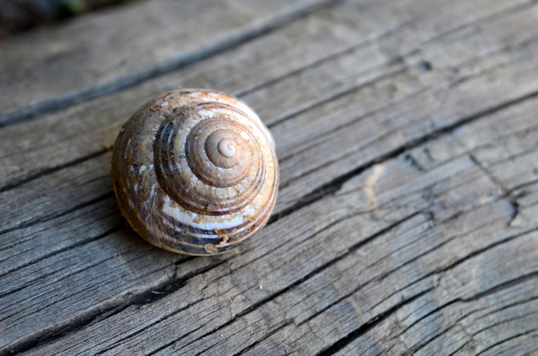 A snail house parked on a wooden step