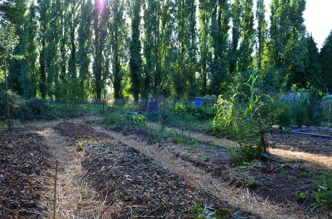 Permaculture garden.