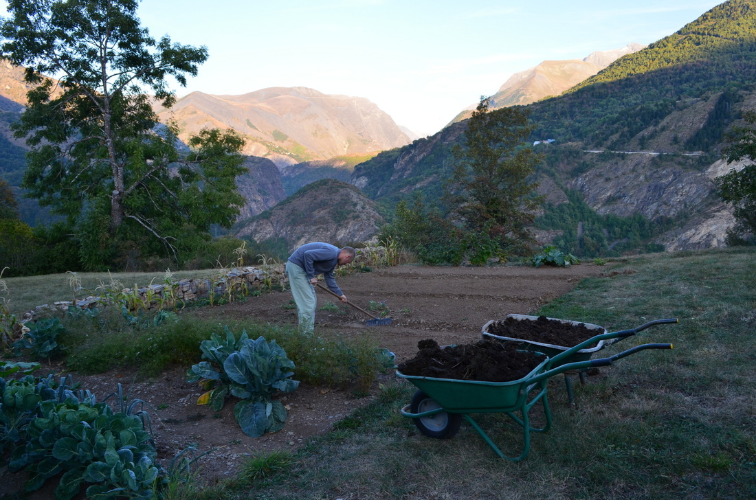 Adding cow manure and partly composted grass as a mulch on the garden beds