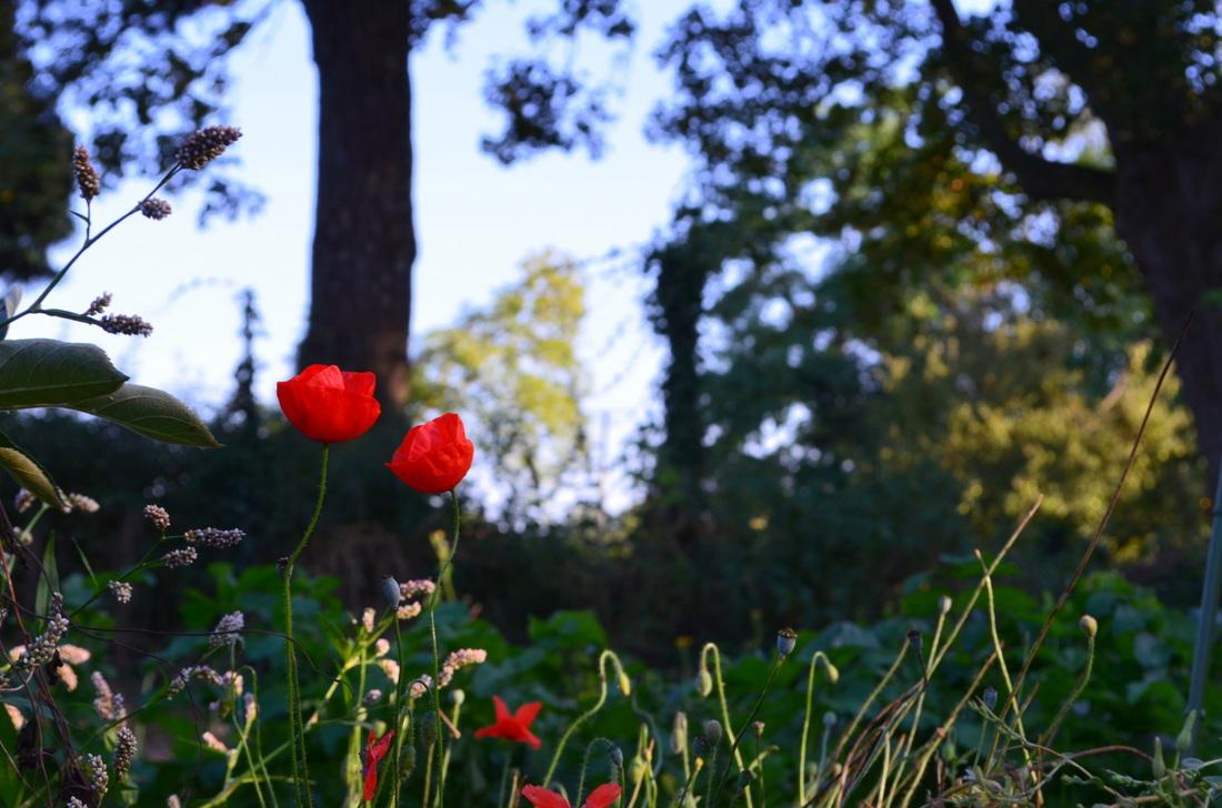 Les fleurs rouges !
