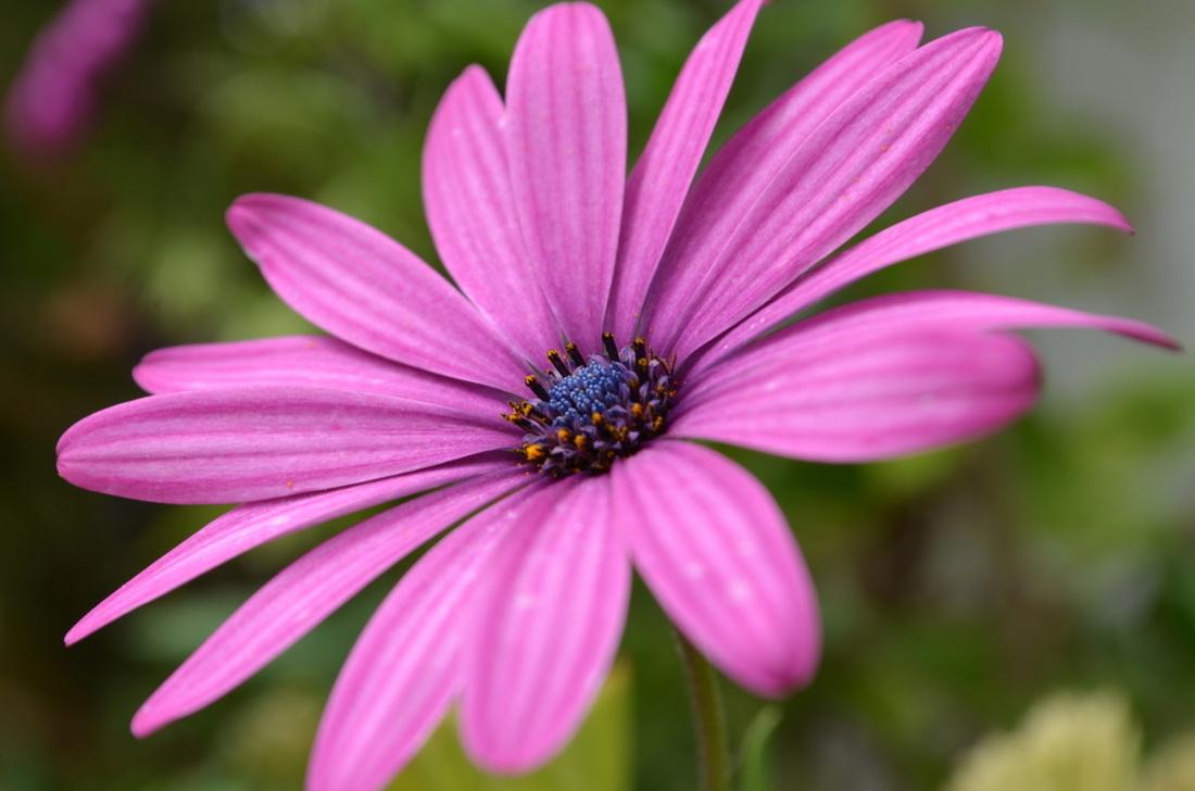 Macro flower.