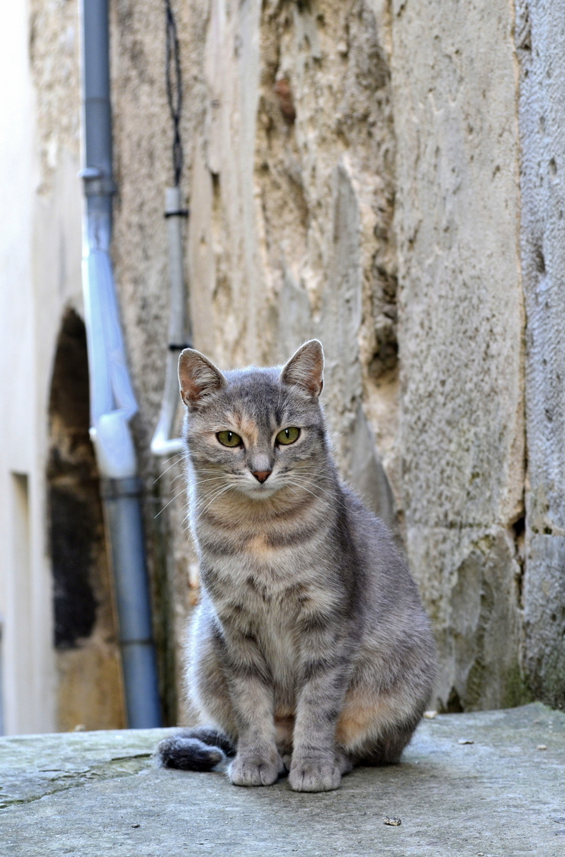 A gorgeous alley cat